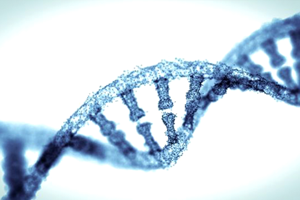 THE WORLD'S FIRST SUCCESSFUL GENE EDITING